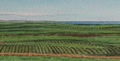 Maui Cane Fields off Haleakala Highway